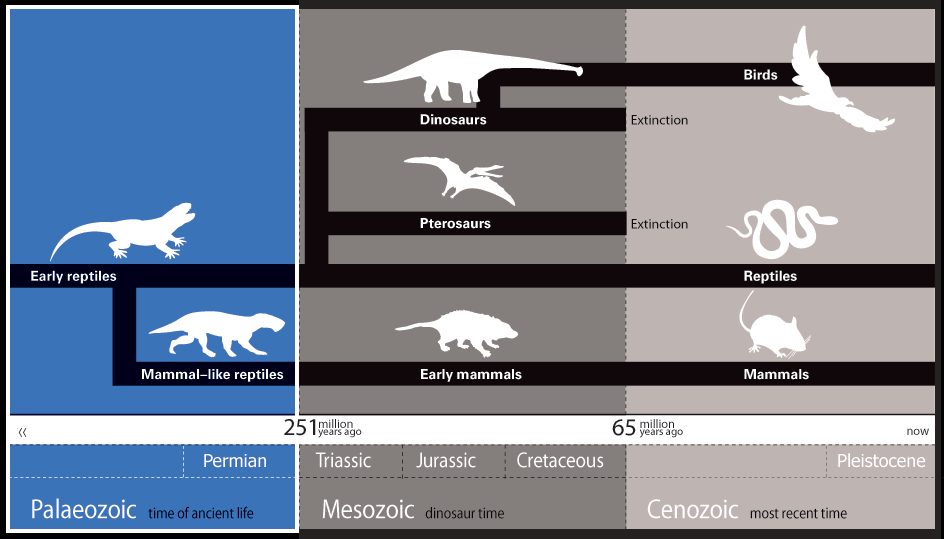 mm-macro-timeline-palaeozoic.png (944×539)
