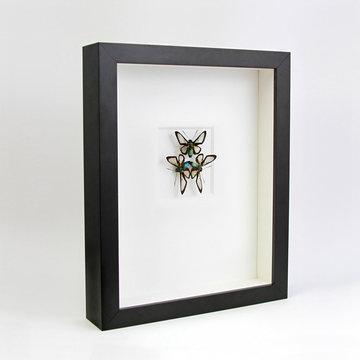 Fab.com   Glasswing Moths Black