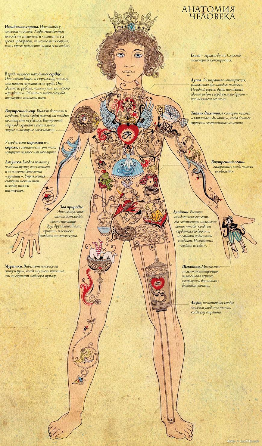 1324222046_human_anatomia_full.jpg (870×1482)