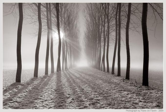 Snow, mist and trees - B&W...: Photo by Photographer Paolo De Faveri - photo.net
