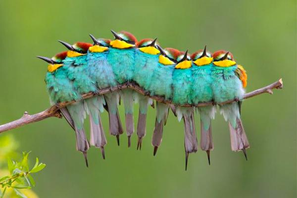 Foto Campioni di Natura, gli scatti vincenti Wild Wonders of Europe - 1 di 10 - National Geographic