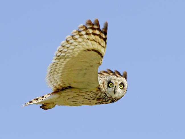 Foto Campioni di Natura, gli scatti vincenti Wild Wonders of Europe - 7 di 10 - National Geographic