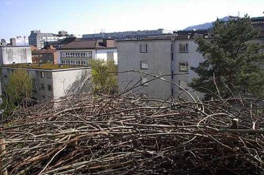 Nest von Rahel Hegnauer | iGNANT
