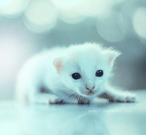 Baby eyes ... by *aoao2