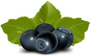 Cholesterol Lowering Effects of Blueberries Demonstrated in Animal Study