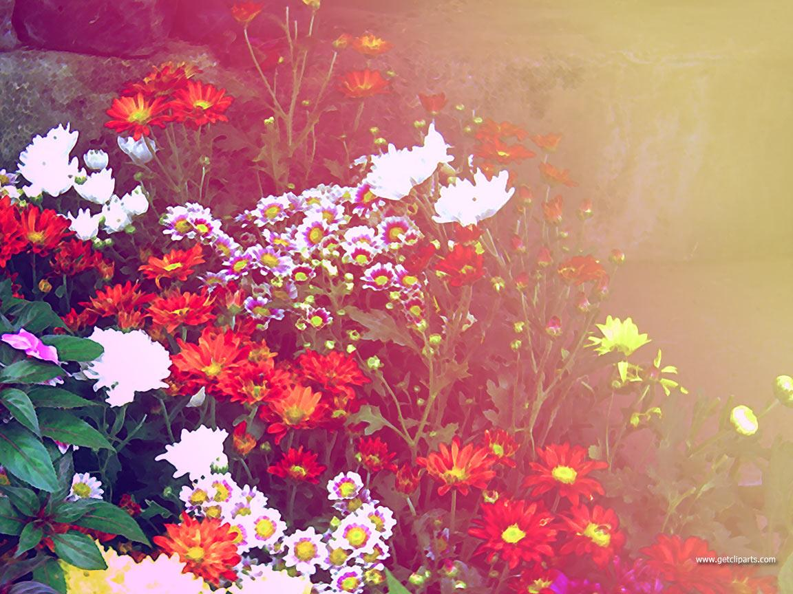 Colorful Flowers | All Collection of Wallpapers