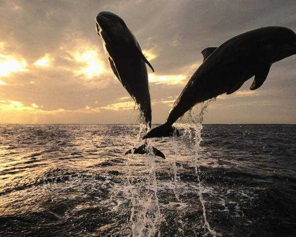ocean,nature ocean nature photography wildlife dolphins sealife 1280x1024 wallpaper – wildlife Wallpaper – Free Desktop Wallpaper