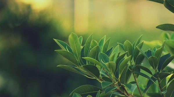 green,leaves green leaves plants macro soft light 1920x1080 wallpaper – Macro Wallpaper – Free Desktop Wallpaper