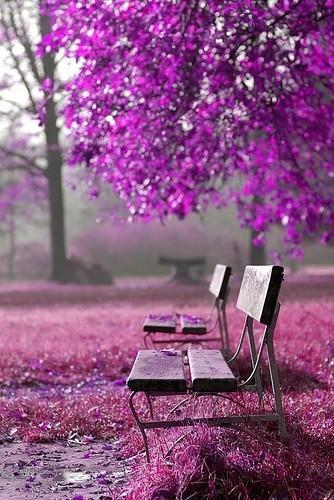 Art - Inspiration - Photography / Violet canopy.