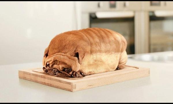 dogs,pugs dogs pugs bread canine 1280x768 wallpaper – Dogs Wallpaper – Free Desktop Wallpaper