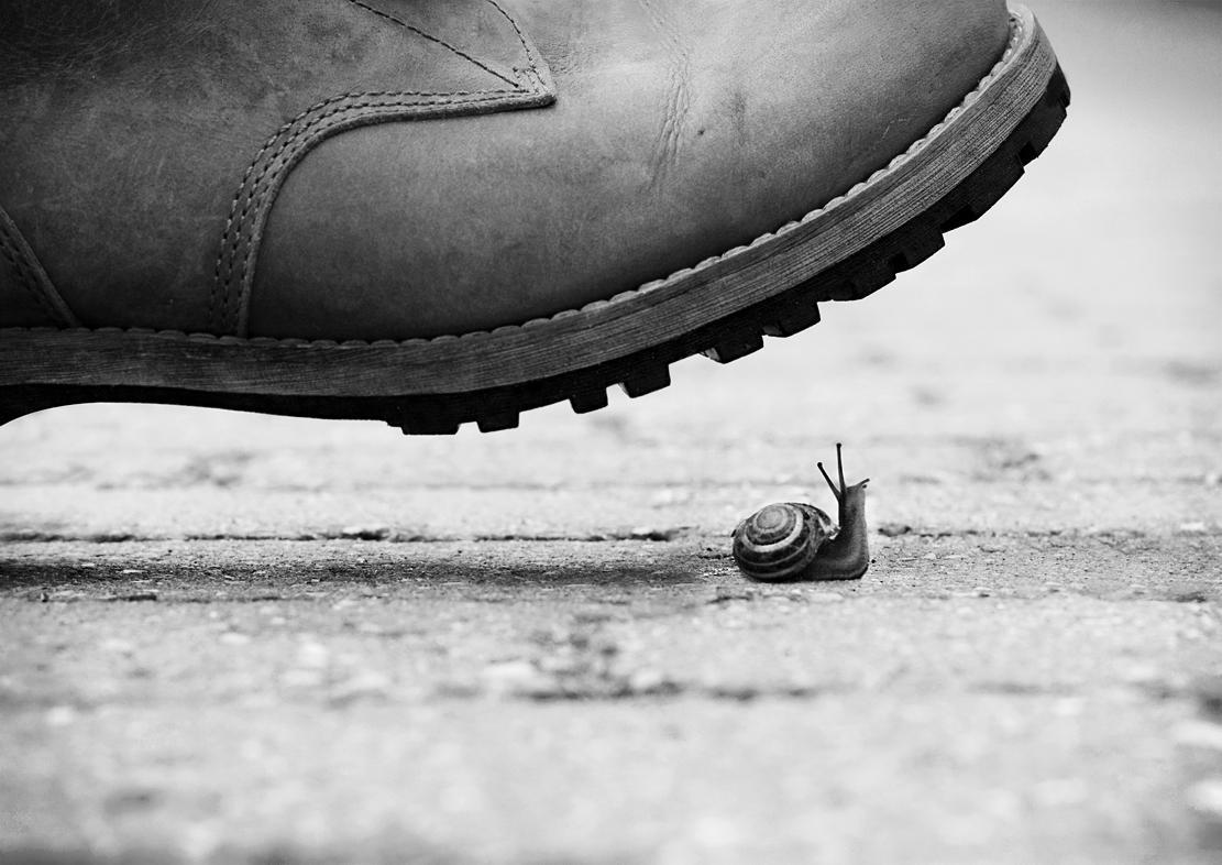 Nichlas Boysen - Photography
