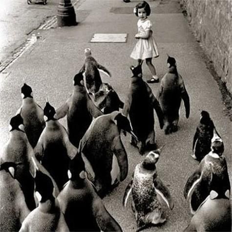 Piccsy :: penguins