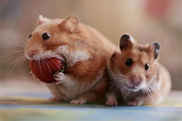 Animal Photography: 30 Amazing Examples