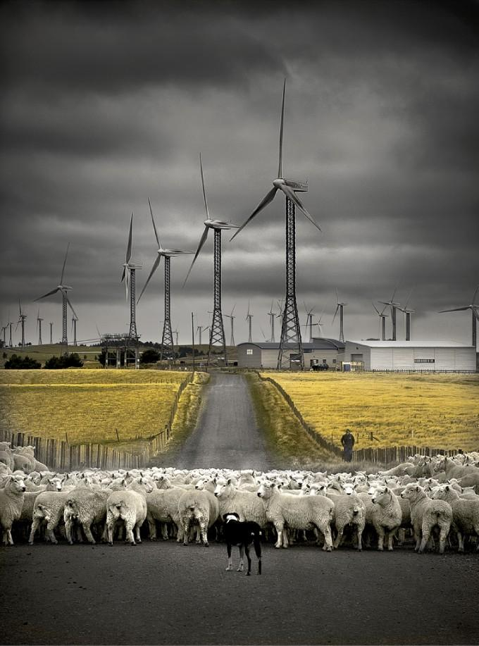 Sheep and Windmills: Photo by Photographer Wayne Rickard - photo.net