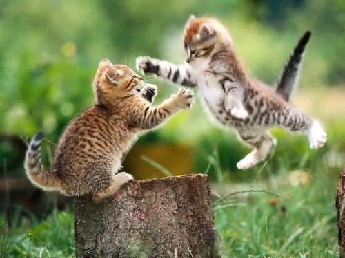 Kittens.jpg (500×375)