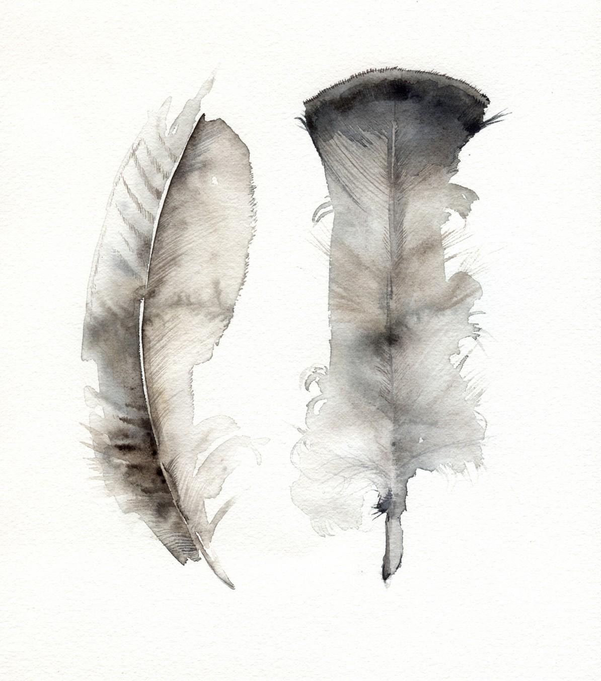 Turkey Feathers archival print feather art by amberalexander