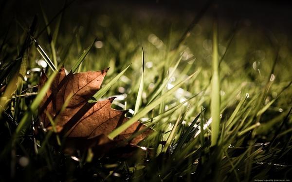 nature,leaf nature leaf autumn grass seasons maple leaf 1920x1200 wallpaper – Autumn Wallpaper – Free Desktop Wallpaper