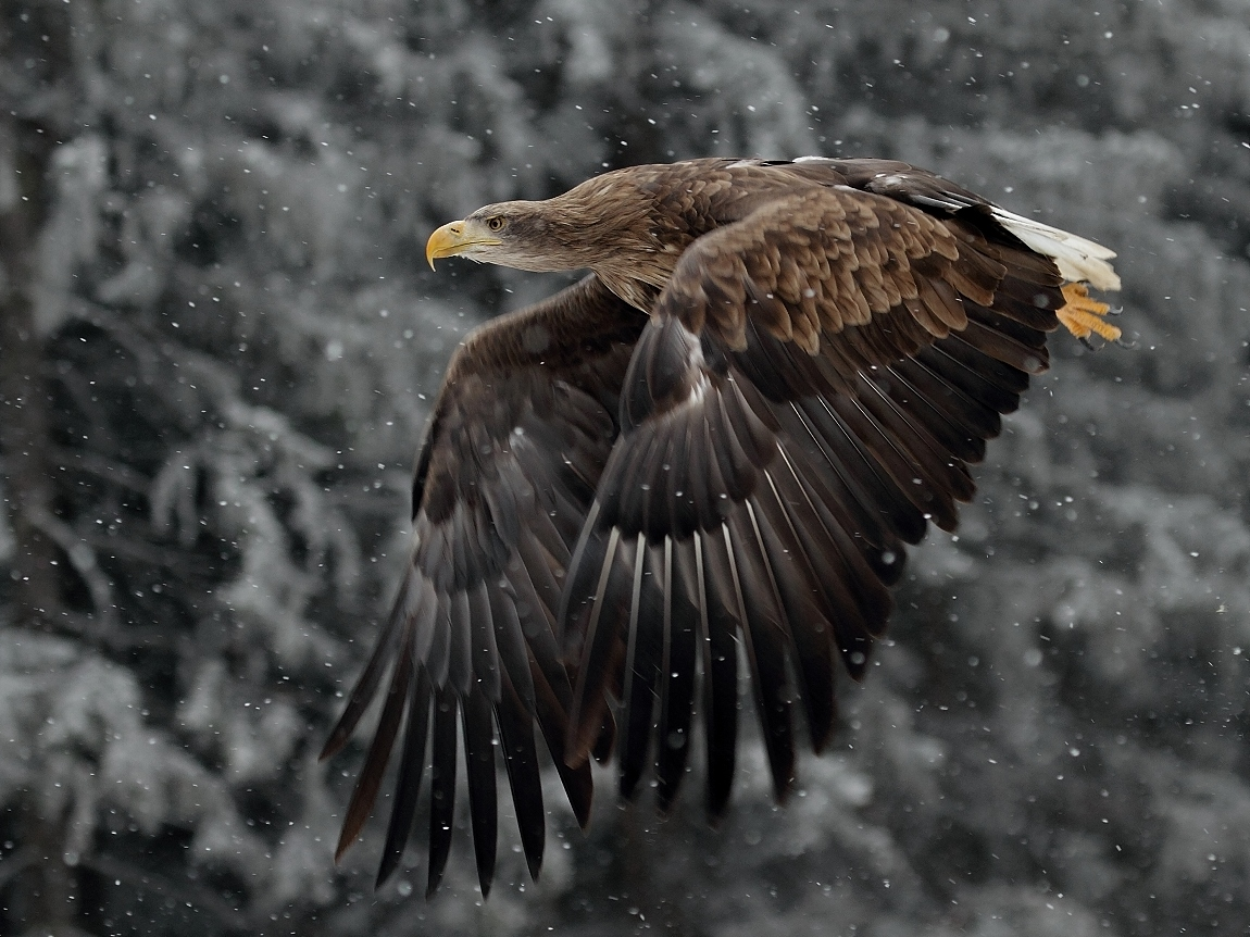 14 Big Birds Captured in Action in Stunning 1150 Pixel Photographs | Photography Magazine PhotoExtract