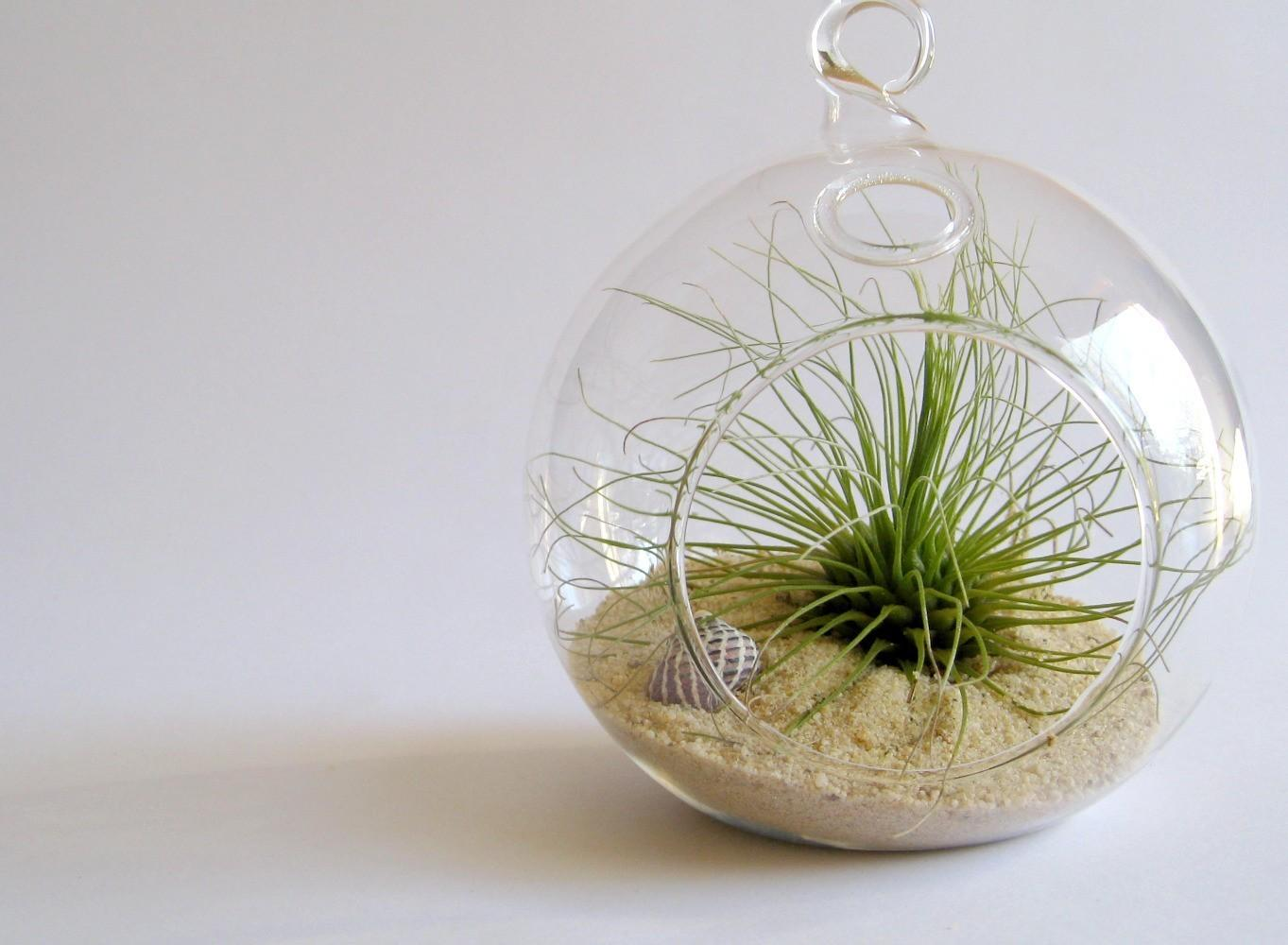 Surf bubble terrarium kit by terradctl by terradctl on Etsy