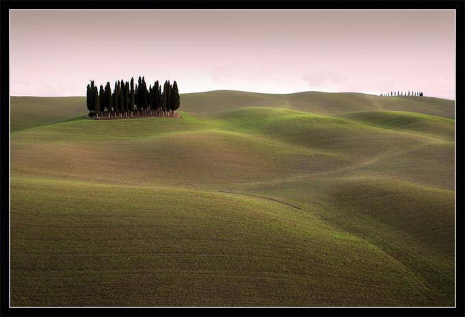 Cypress Hill: Photo by Photographer Emanuela Carratoni - photo.net