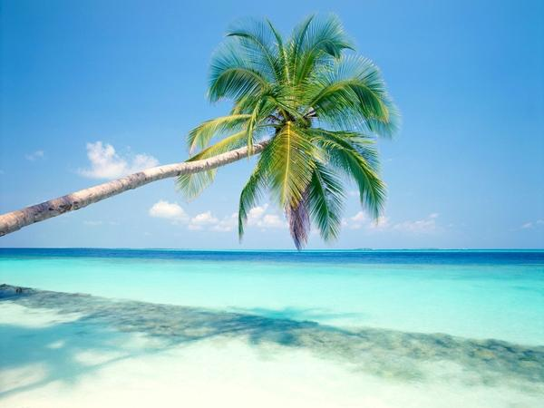 beach,palm trees beach palm trees 1600x1200 wallpaper – Trees Wallpaper – Free Desktop Wallpaper