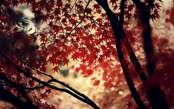 autumn,wood autumn wood forest photography leaves deviantart momiji 2560x1600 wallpaper – Photography Wallpaper – Free Desktop Wallpaper