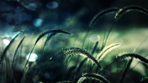 grass grass 1920x1080 wallpaper – Grass Wallpaper – Free Desktop Wallpaper