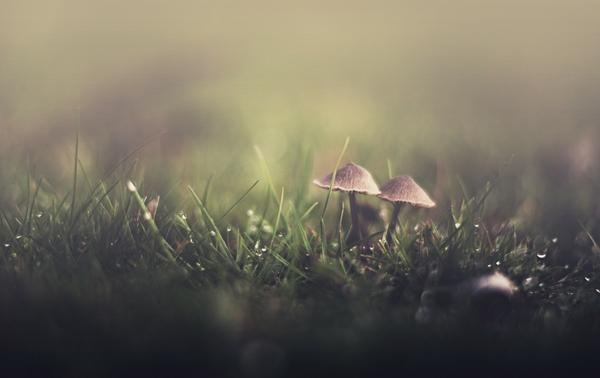 grass,mushrooms grass mushrooms water drops fungus raining 1900x1200 wallpaper – Grass Wallpaper – Free Desktop Wallpaper