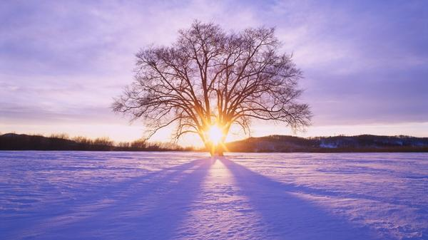 landscapes,nature landscapes nature snow trees 1920x1080 wallpaper – Snow Wallpaper – Free Desktop Wallpaper