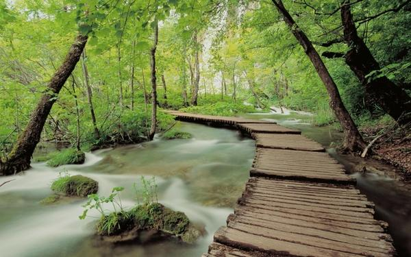 Free Nature Photography nature photography bridges