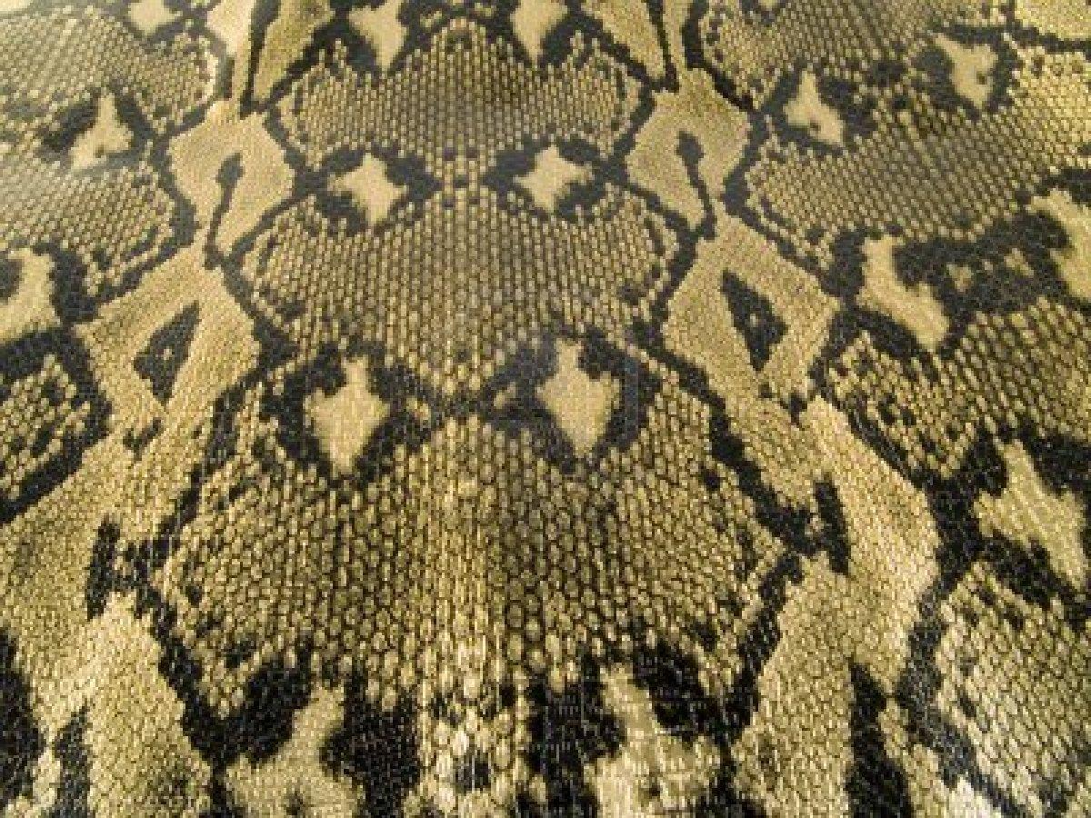 A Close Up On A Snake Skin Texture Royalty Free Stock Photo, Pictures, Images And Stock Photography. Image 822526.