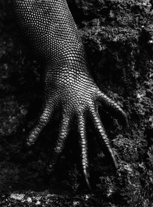 Wake Me Up In Annarchy, by Sebastião Salgado