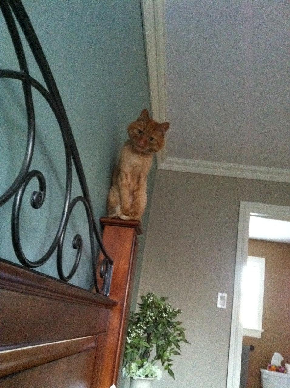 Freaky Cat - Craized.com
