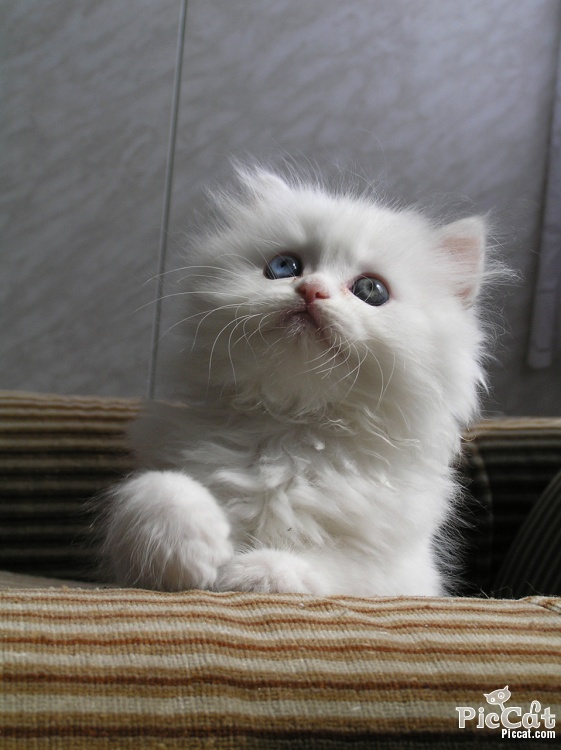 Angel look