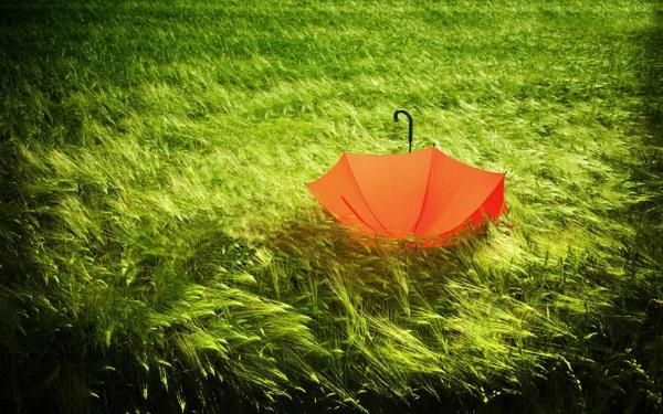 green,orange green orange grass umbrellas 2560x1600 wallpaper – Grass Wallpaper – Free Desktop Wallpaper