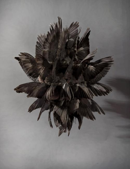 Tabac et du cuir (fièvre noire par Polly Morgan)