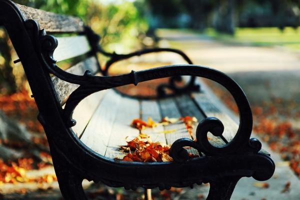 close-up,nature closeup nature autumn leaves path bench scenic 2570x1714 wallpaper – Autumn Wallpaper – Free Desktop Wallpaper