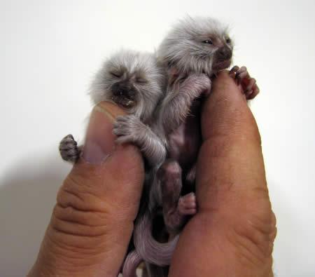 10 Fascinating Albino Animals - Oddee.com (albino animals)