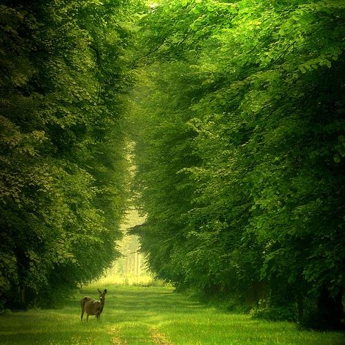 All shades of GREEN /