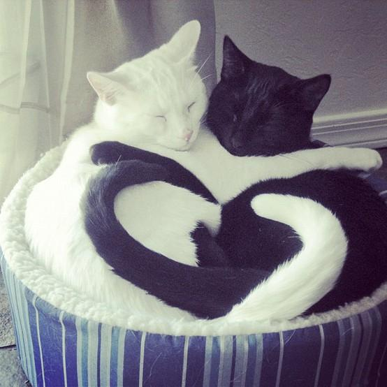"Animals / ""Even fast asleep, they're never apart. #loveamazingly"""