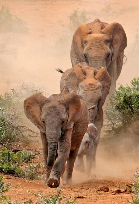 Animals / Elephants