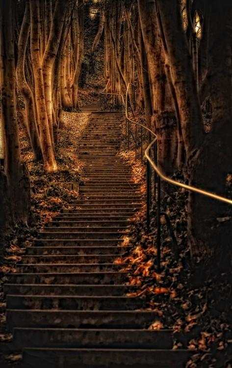 Brown .:. Dark B.R.O.W.N. / Forest Steps, Wurzburg, Germany