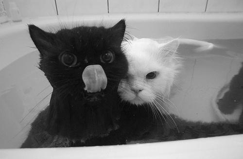 c u t e / Bath time.