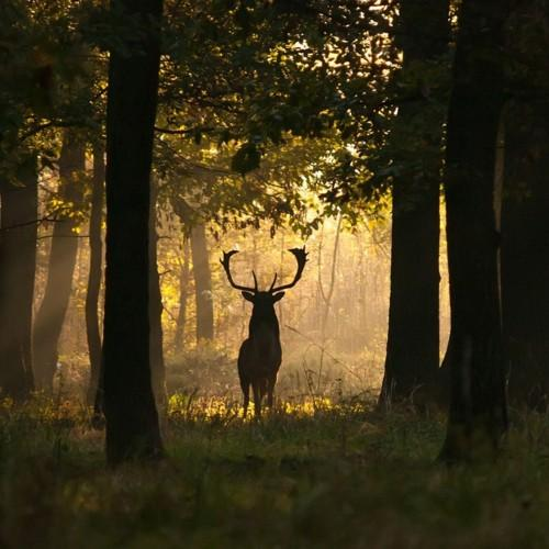 Fairy Tale / Deer