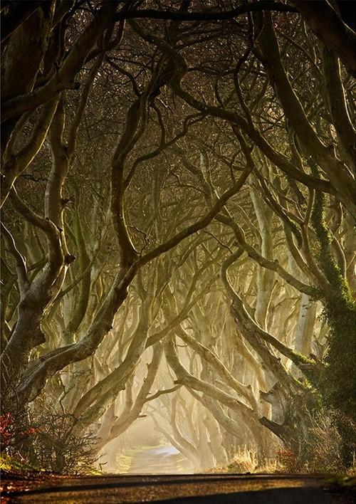 Fairy Tale / magical trees