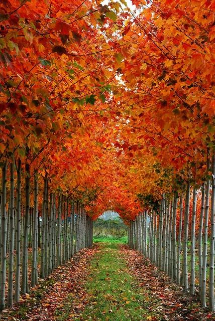 Fall in love with fall / Stunning!
