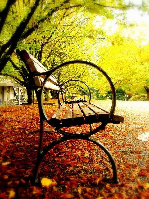 Fall in love with fall / Take a seat, enjoy!