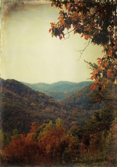 Falling into Autumn / Appalachian autumn