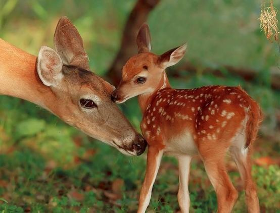 Favorite Wild Animals / I Am So Fawn'd Of You | Cutest Paw