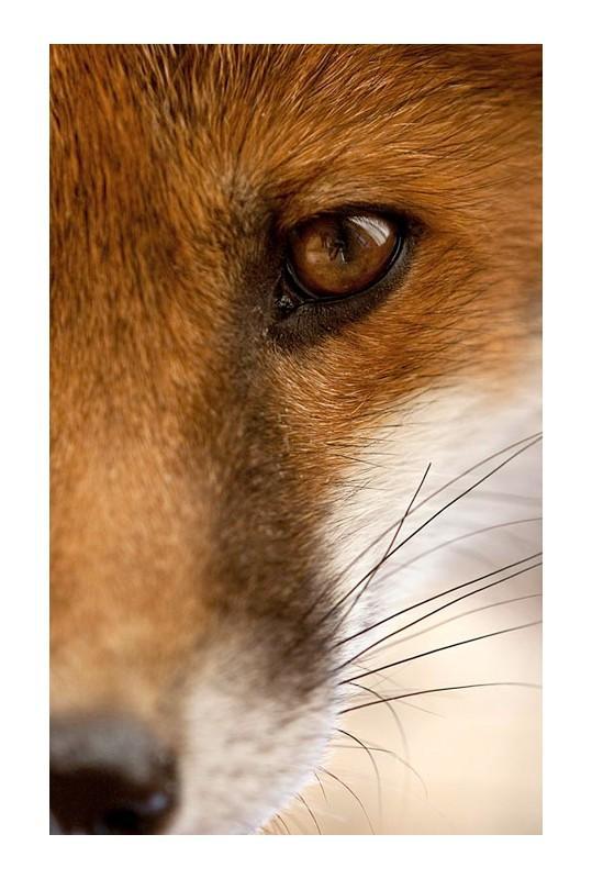 Favorite Wild Animals / Jules Cox Photography - Portfolio